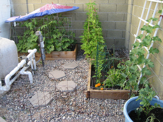 organic veggie garden